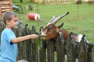 Ethan, goat copy