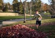 41 Leaf pile, 6932